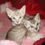 thumbs_k-azi-kittens-nov-2010-03