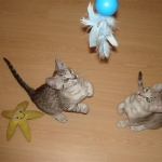 thumbs_k-azi-kittens-nov-2010-12